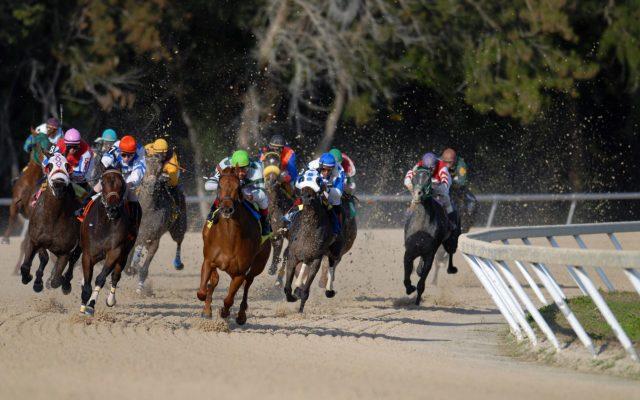 AmWager.com、ライブ競馬、ベッティング、スポーツ賭博