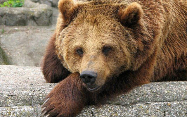 Bitcoin Bearish Trend May Be Over Very Soon