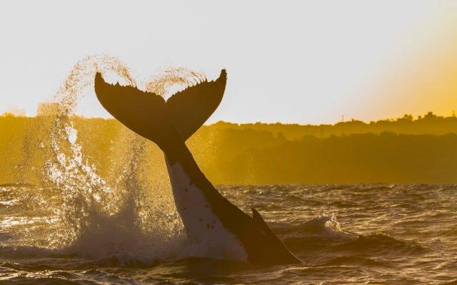 Mt. Gox whale bitcoin