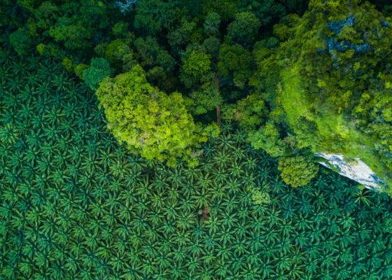 Blockchain May Resolve Palm Oil Problems