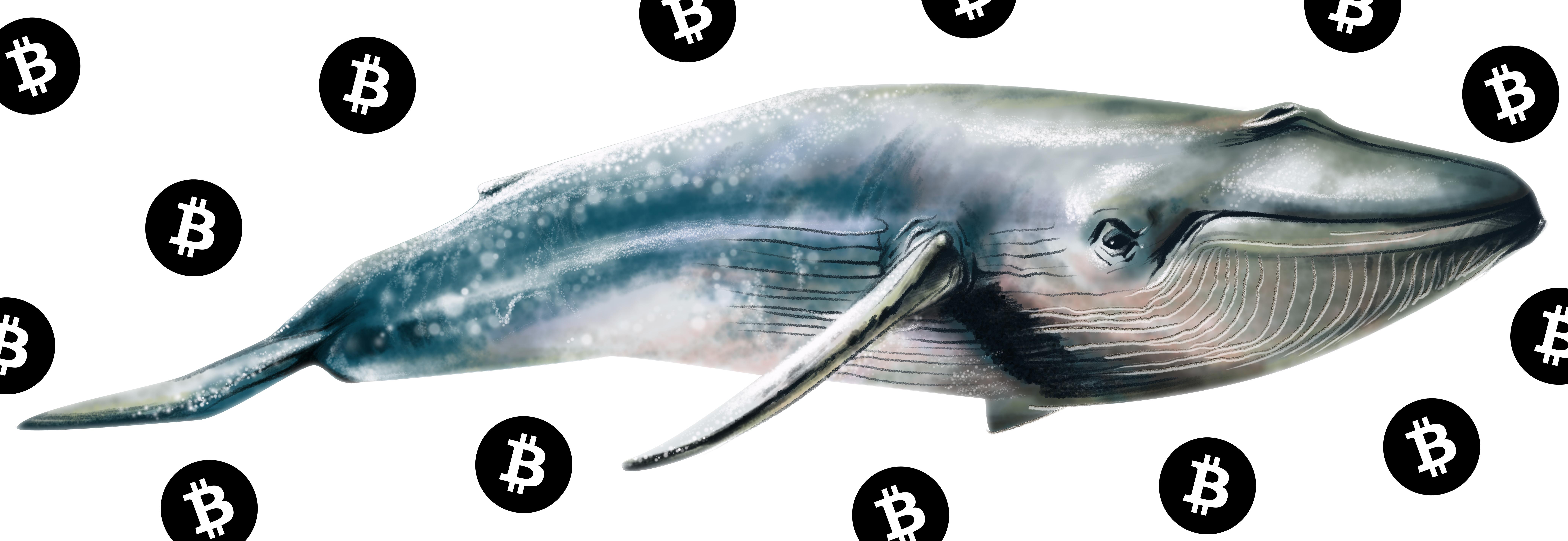 以前は活動していなかったクジラたちは大量のBTCを移動しています