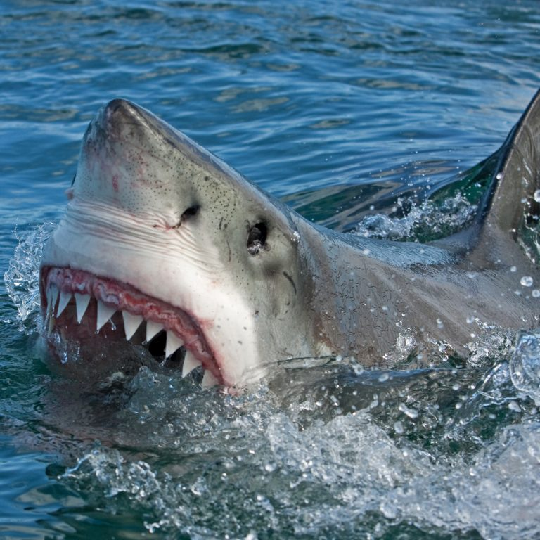 Only Sharks Will Feed on the Crypto-Market's Evasive Price 'Bottom'