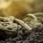 Altcoin 'Extinction' Event Could Happen Now, Says Xapo President